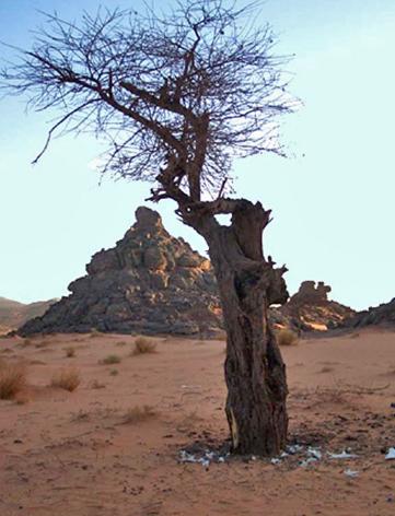 desert_arbre