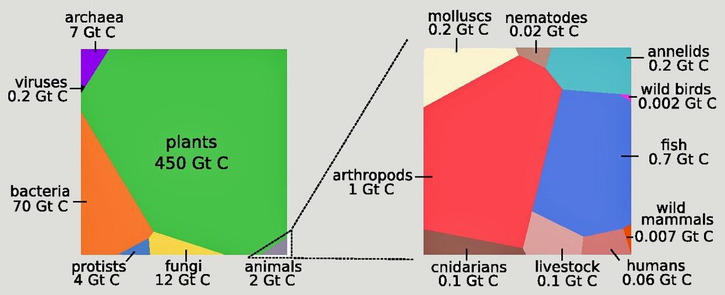 poids biomasse_1